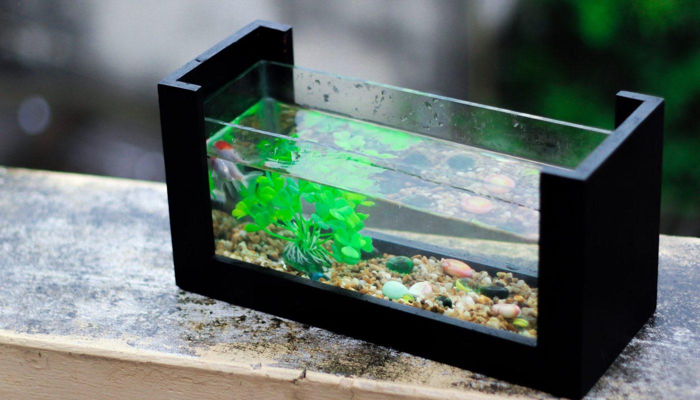 9 важных советов начинающим аквариумистам