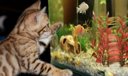 какую воду заливать в аквариум