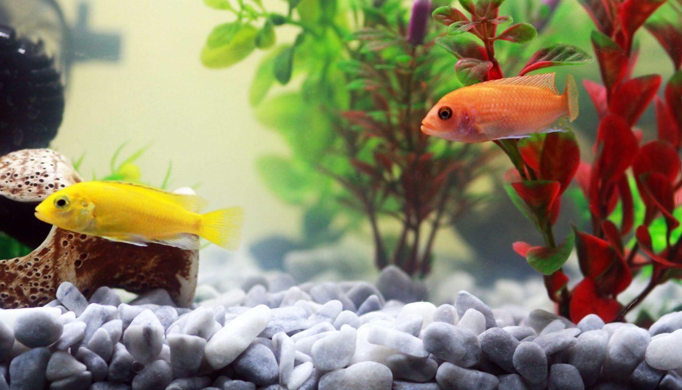 Обустройство аквариума. С чего начать?