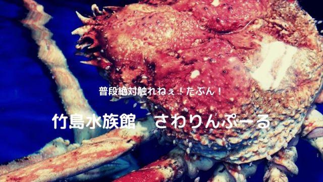 竹島水族館 触れるプール