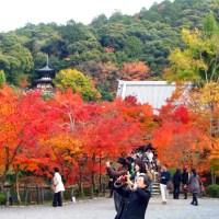 Autumn in Japan  :   Autumnal color of an ancient city