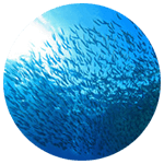 sustainable farming fish farms