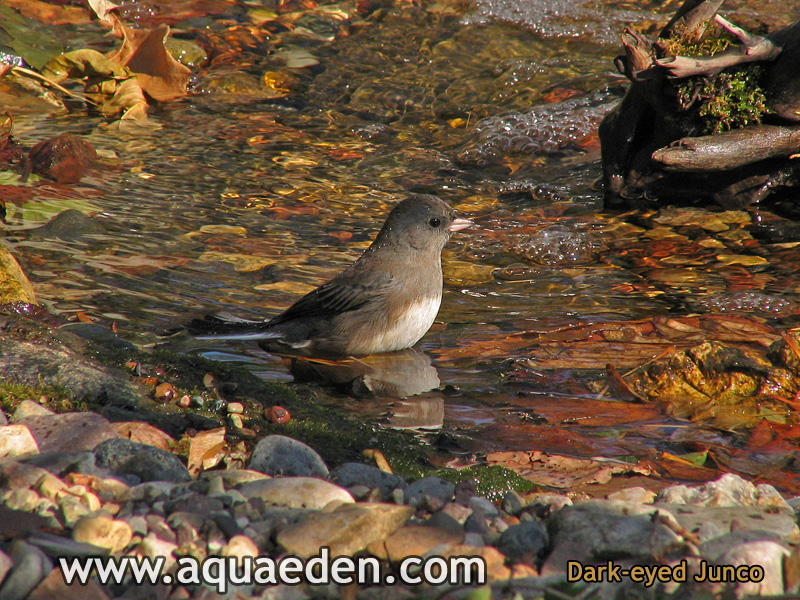Birds And Waterfalls Attracting Wild Birds With Water