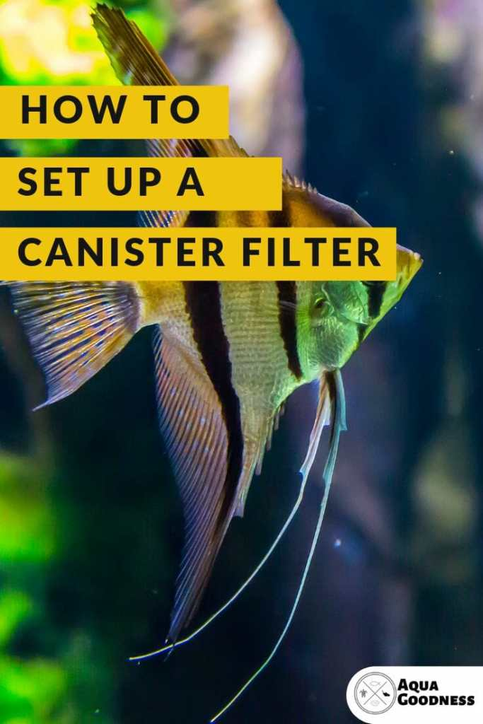 How to set up a canister filter image