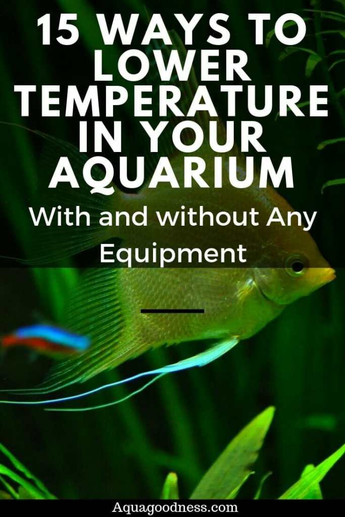Ways to Lower the Temperature in Your Aquarium