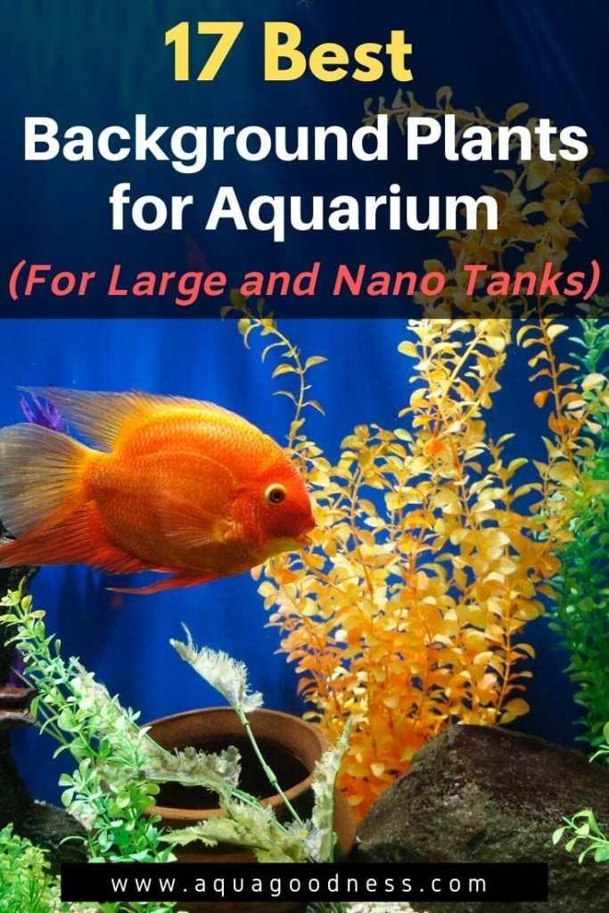 Best Background Plants for Aquarium image