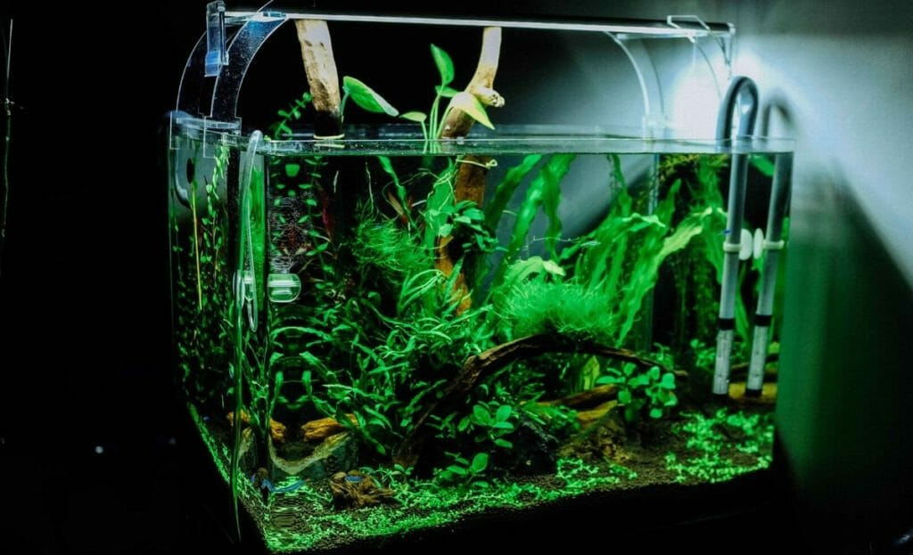 is led light good for fish tank 6