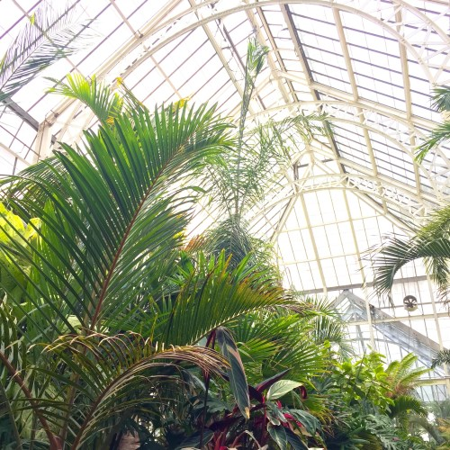 Biltmore_Conservatory