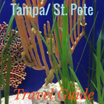 tampa_travel_guide