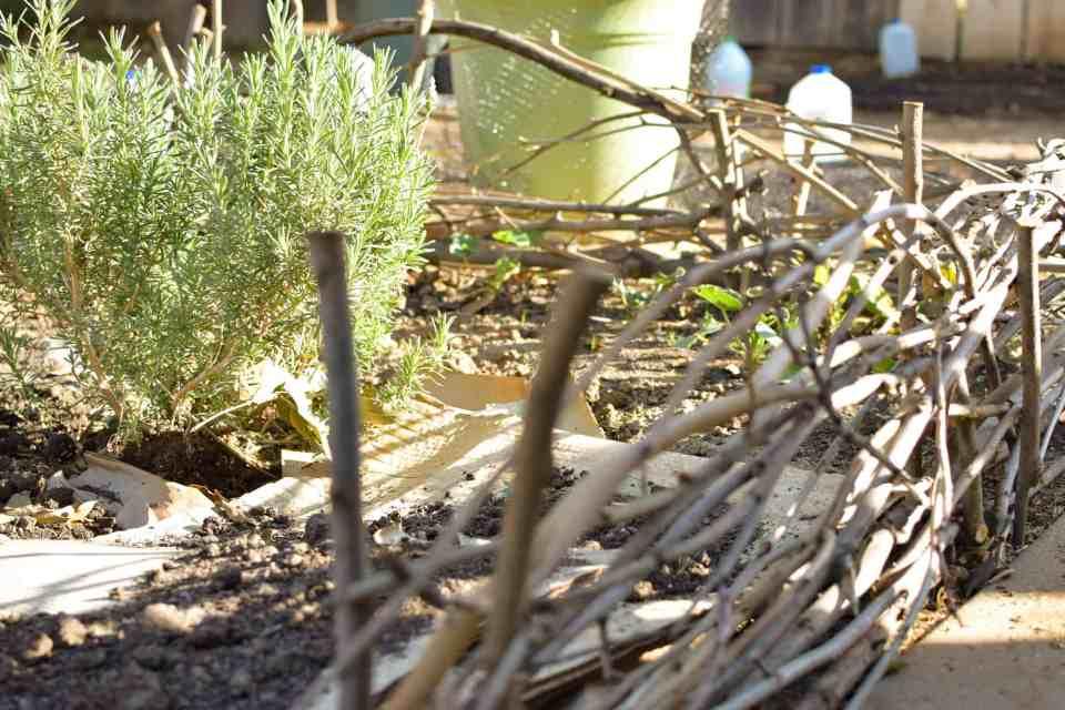 wattle fences with lavendar bushes