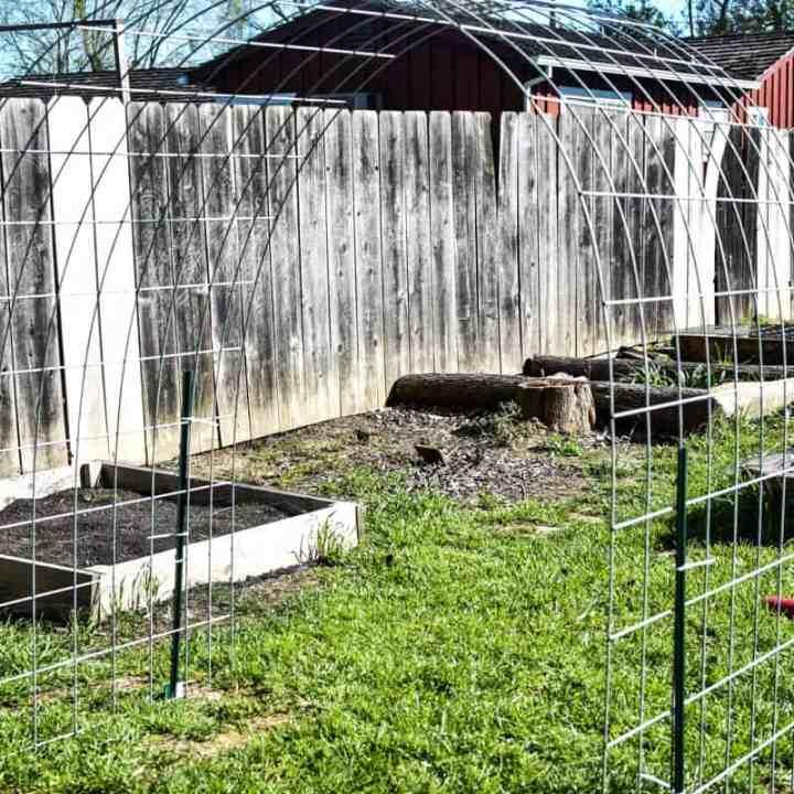 garden trellis in a garden