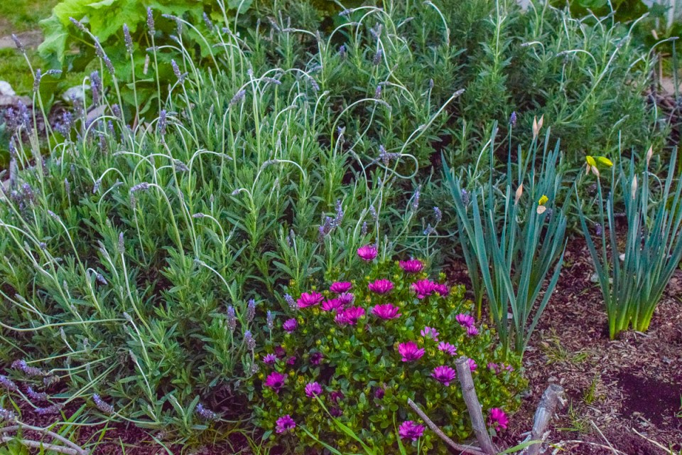garden bed weeded during the garden walk