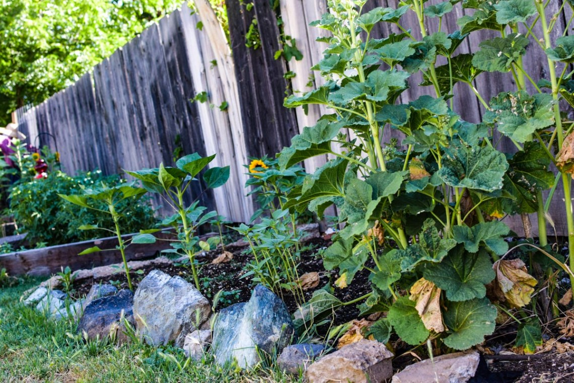 a garden bed filled with plants for garden inspiration