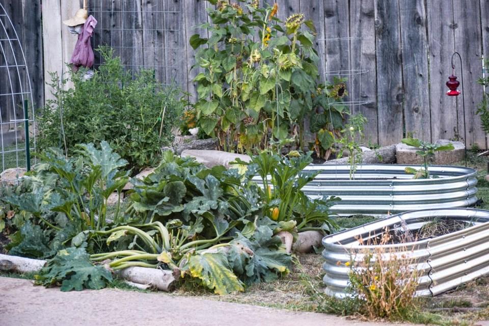 metal garden beds in a city farmhouse
