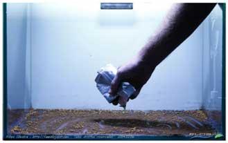 cara membuat aquascape 2 Cara Membuat Aquascape