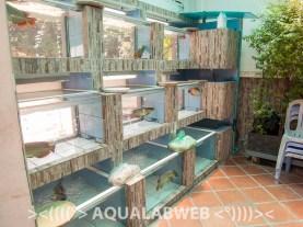 exhibition with luxury fish Arowana