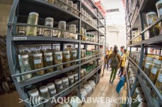 Storage room with the fish collection at the IFReDI
