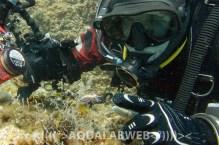 Diver with seaslug