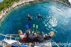 snorkeling in tidal zone