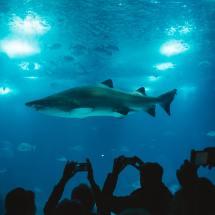 Swimming With Sharks - 9 Tips Aquamobile Swim School