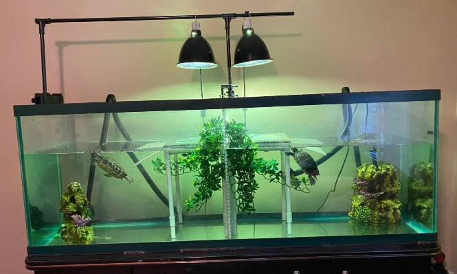 uvb lights for a turtle tank
