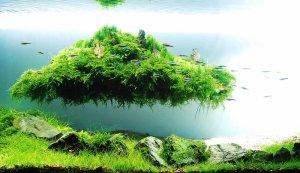 aquascape aquarium fertilisers natural decorations shrimp food fish premium food aquaplantscare.uk