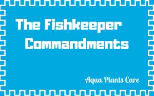 diy fertilisers plants care aquarium fish tank aqua plants care fish