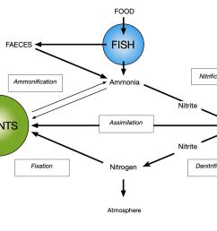 diagram showing the nitrogen cycle [ 1024 x 819 Pixel ]