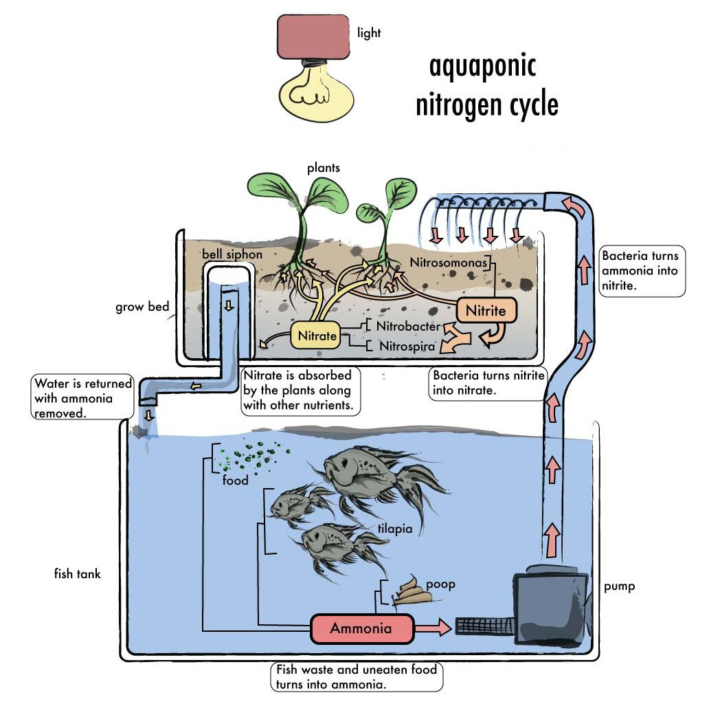 hight resolution of aquaponics diy plans aquaponics how to build an aquaponics