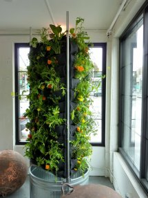 Vertical Aquaponics City-dwelling Vegetable Farming