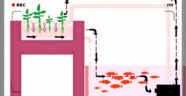 aquapon ics diagram,aquaponics design