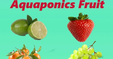 aquaponics fruit