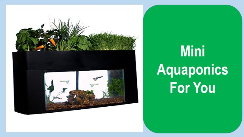 Top 7 Best Mini Aquaponics System For You – Aquaponics ... Aquaponics Small Home Designs on small home aquaculture, small grow kits, small home farm, small home growing, small home composting, small home community, small home orchard, small home design, small home homesteading, small home products, small home gardening, small home water purification, small home ponds, small home technology, small home diy, small home solar power, small home architecture, small home sustainable development, small home nursery, small home aquarium,