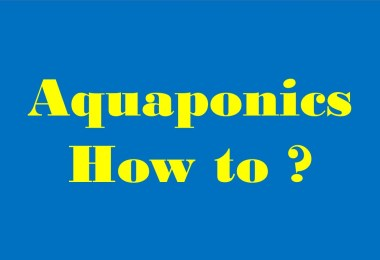 aquaponics how to