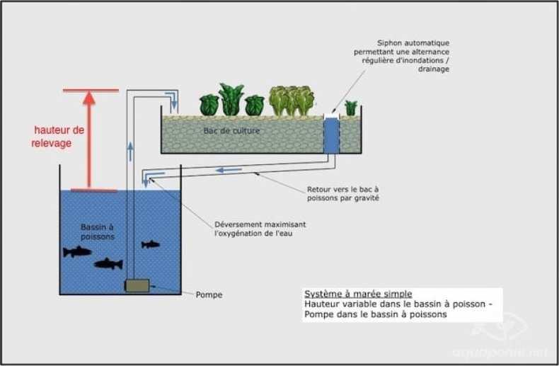 Choisir et dimensionner sa pompe pour l 39 aquaponie for Pompe bac a poisson