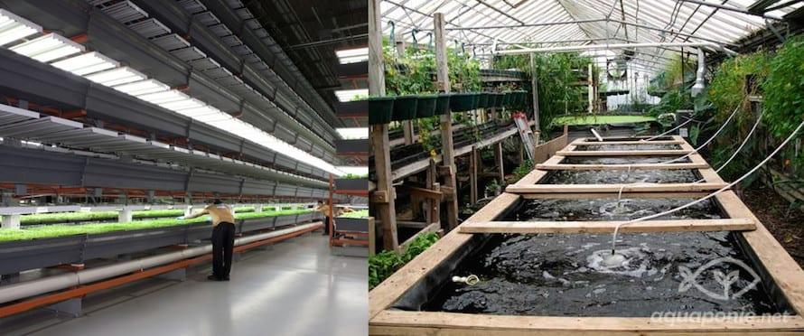 ferme industrielle vs ferme urbaine communautaire