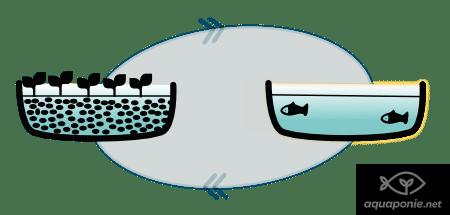 Système d'aquaponie manquant de poissons