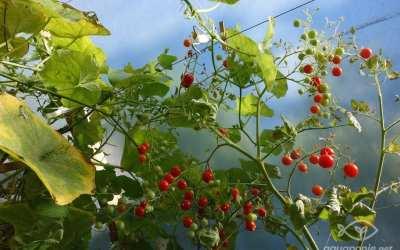 Bilan après les vacances – les belles plantes de l'été