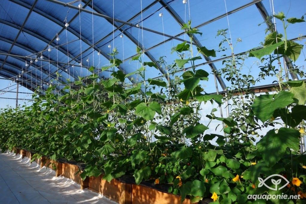Agriculture urbaine : Appel à projets Parisculteurs