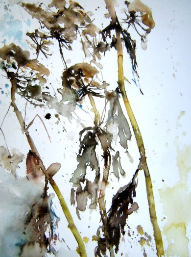aquarell, pflanzen, herkulesstaude, riesenbärenklau