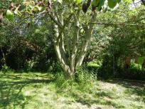 garten, garden, pleissing, nussbaum, chestnut tree