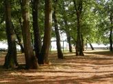 Kroatien, istrien, croatia, umag, eichen, oaks, bäume, trees, campingplatz, campside. eichenwald, eichenwäldchen