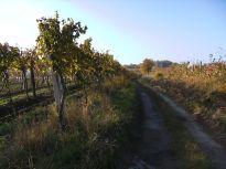 landschaft, landscape, weinviertel, hütte, barn, scheune, weingärten, weinberge, weinstöcke, vine