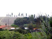 toskana, tuskany, toscane, landschaft, landscape, paysage, italien, italy, italie, castelfiorentino, zypresse, cypress, cyprès