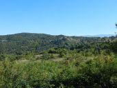 bäume, trees, arbres, landschaft, landscape, paysage, dorf, village, hügel, hill, colline, olivenbäume, olive trees, olivier, olivenhain, olive grove, olivaie, italien, italy, italie, toskana, tuskany, toscane, bicciano, casentino