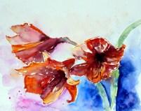 aquarell, watercolor, aquarelle, amaryllis,