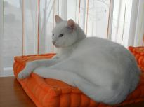 2014-03-23 - Katzen 3