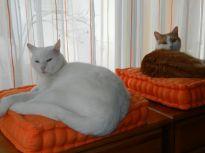 2014-03-23 - Katzen 4