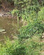 teich, pond, étang, laghetto, stagno, retzbach