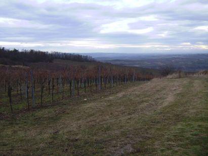 retz, weinberg, vineyard, vignoble, vigna, vigneto, weingarten, vineyard, vigne,